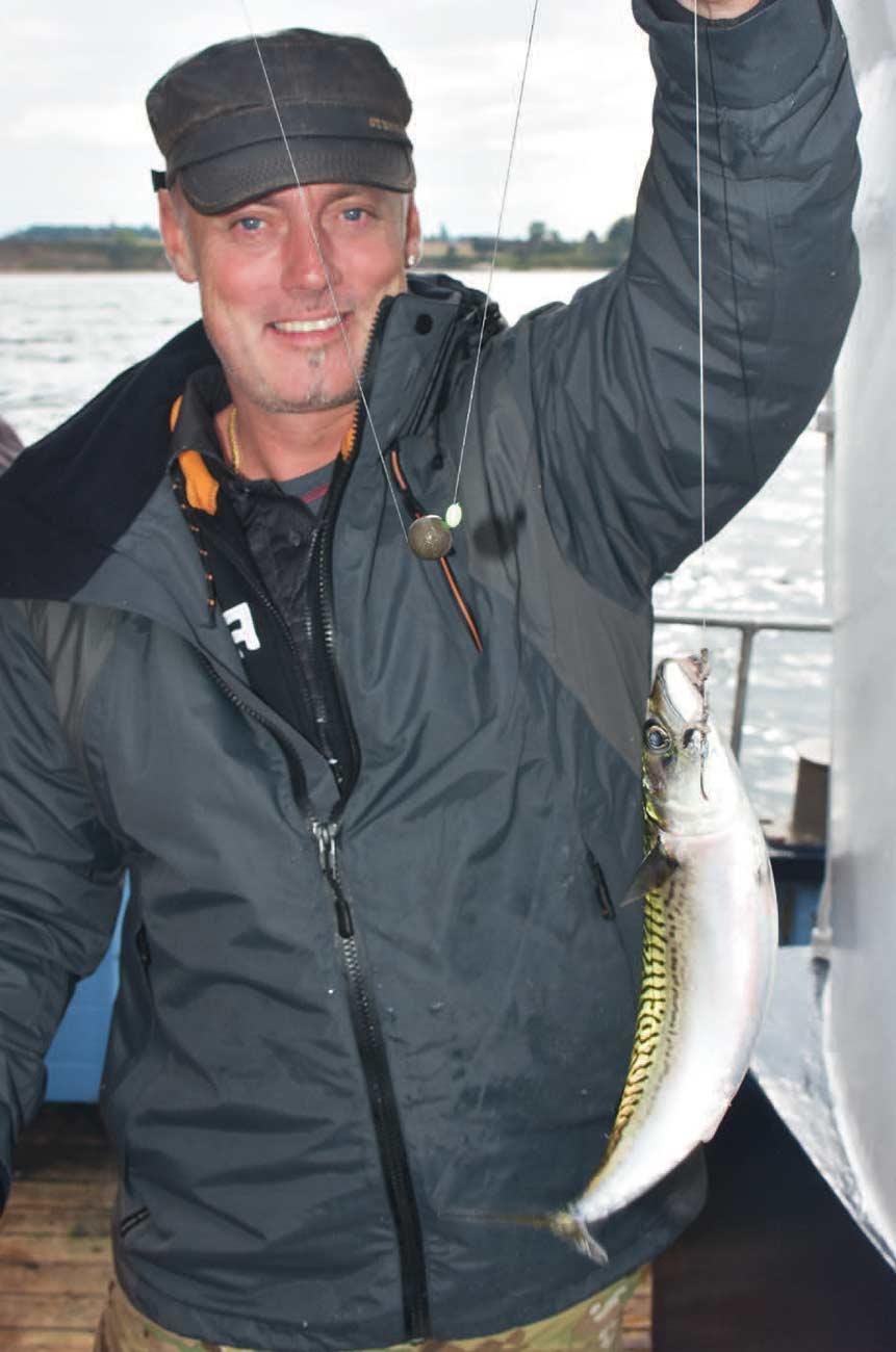 Små strimler med sild er en suveræn agn til makrel.