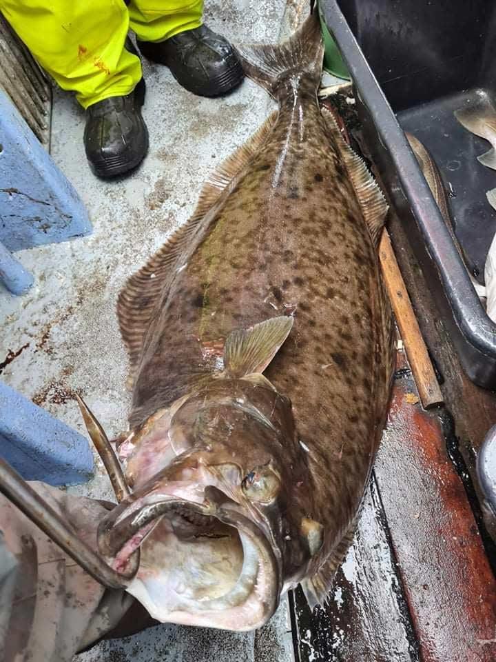 32 kilo vejede den flotte helleflynder Flemming Lagersted Jørgensen fangede.