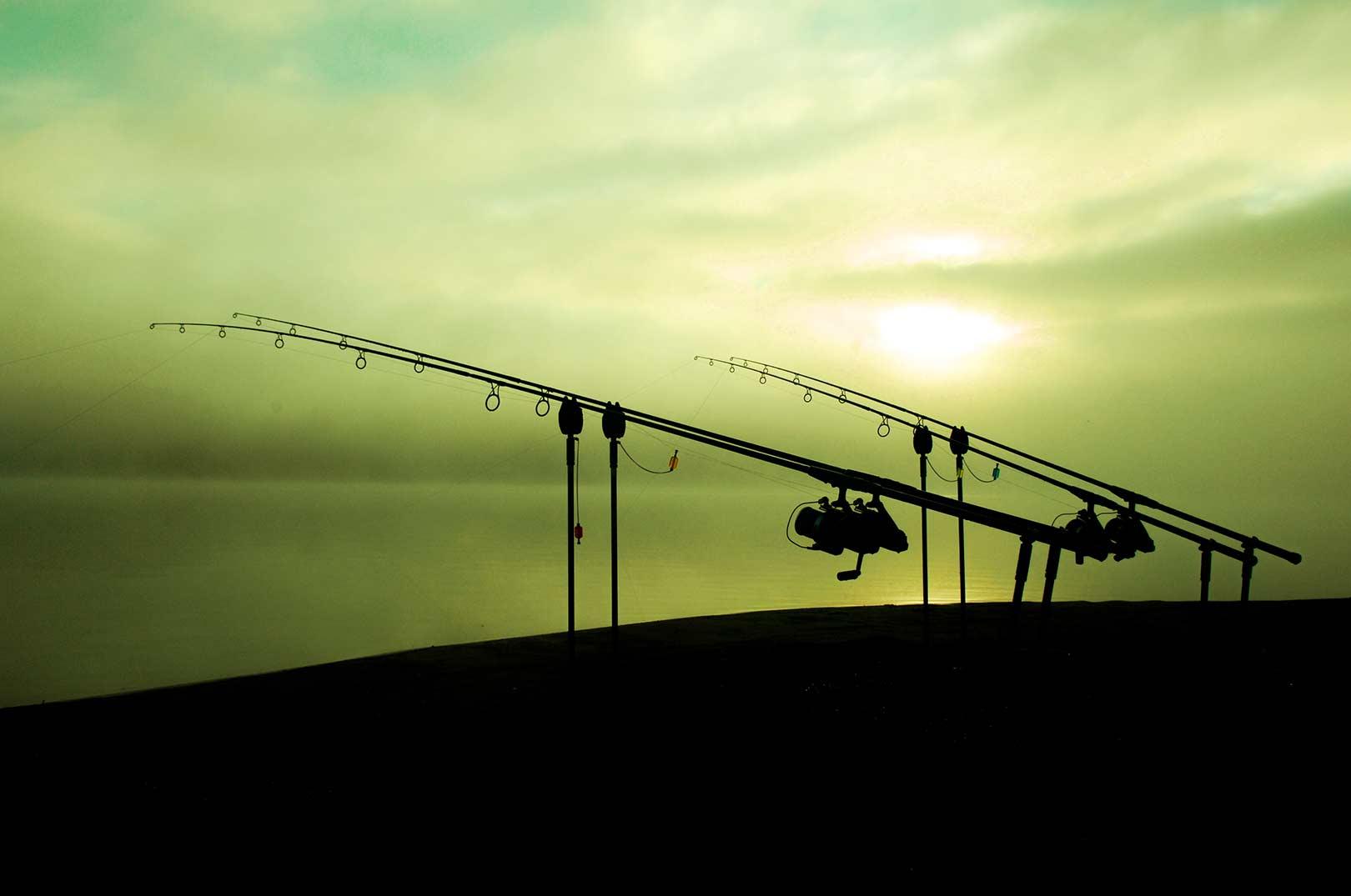 En af de meste fantastiske ting ved karpefiskeriet er de skønne naturoplevelser man får ved at tilbringe flere døgn ved vandet, hvor man oplever dagnes skifte til nat og omvendt.