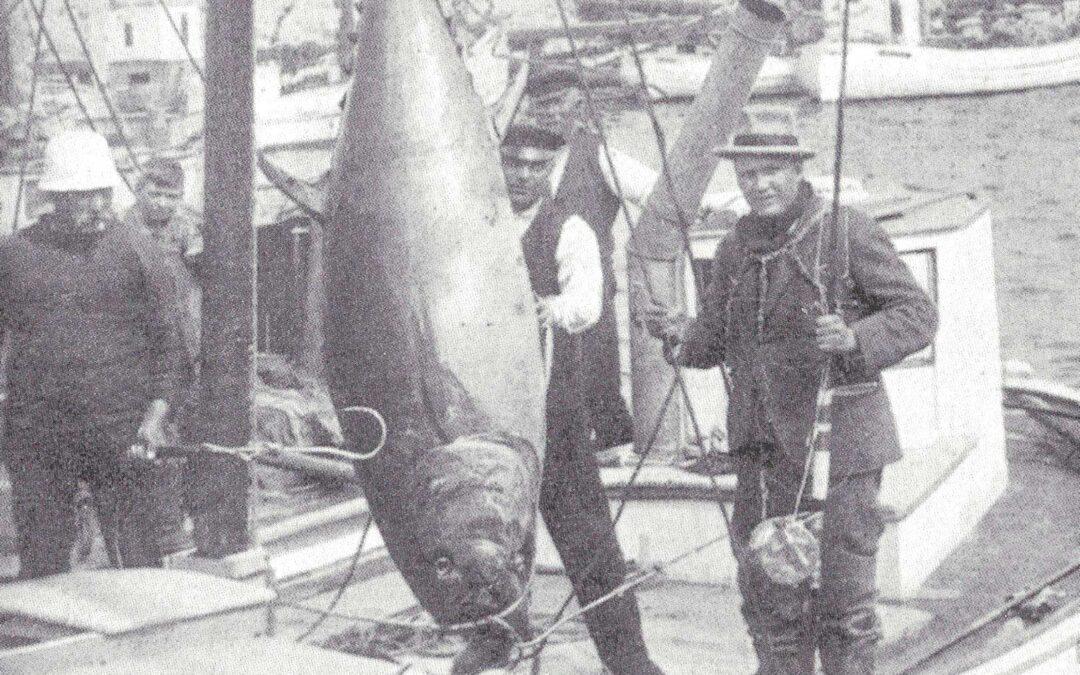 Kaj Møller med sin første tun fanget i dansk farvand efter Zane Greys forbillede og med både hjul og stang fra hans Zane Grey big game serie af grej.