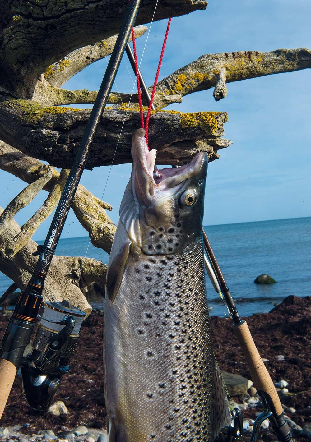 En fiskegalge er god at have, når fangsten skal slæbes hjem - her er det Woodfish galgen, som er i aktion