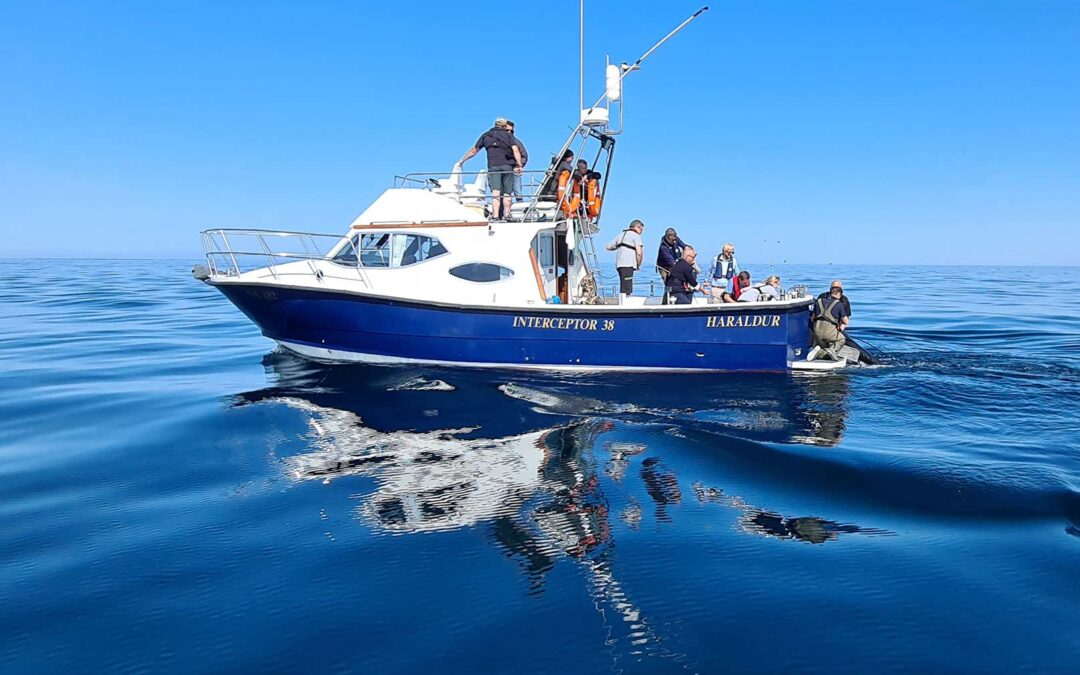 Det er fra mærkningsbåden Haraldur, at DTU Aqua mærker de blåfinnede tun.