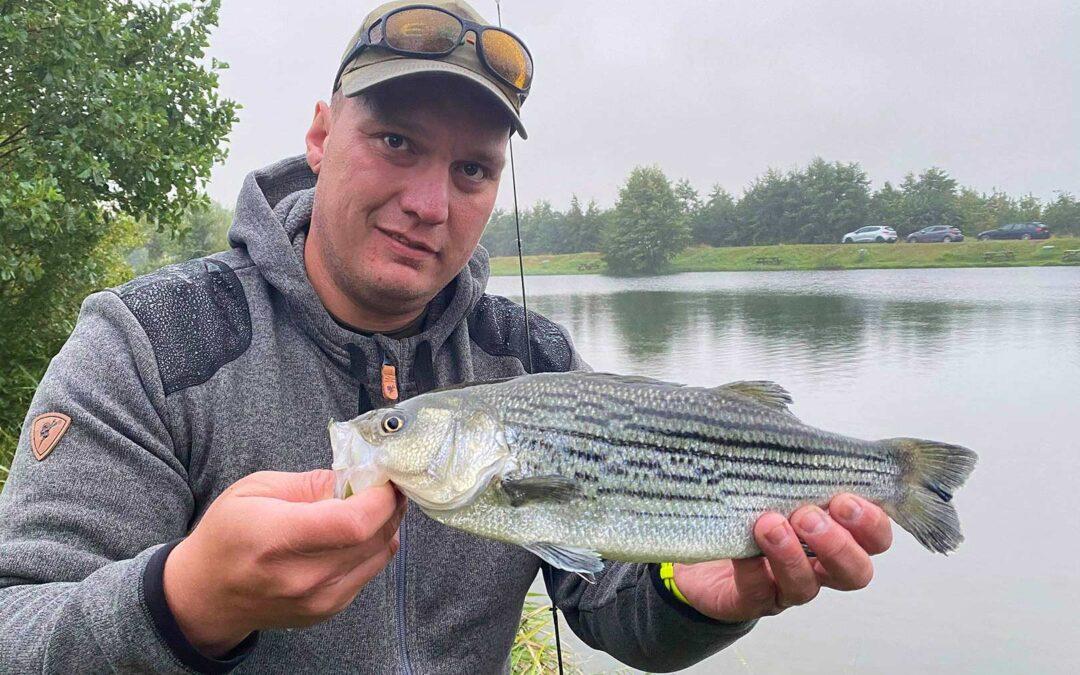 Sunshine bass udsættes nu flere og flere steder i landets put and take søer.