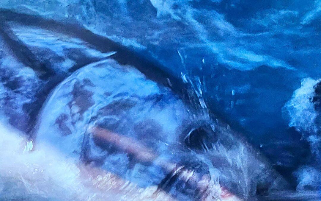 Den blåfinnnede tun er i følge IUCN ikke truet længere.